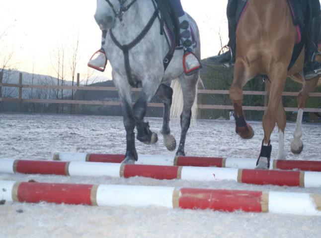 caballos-durango